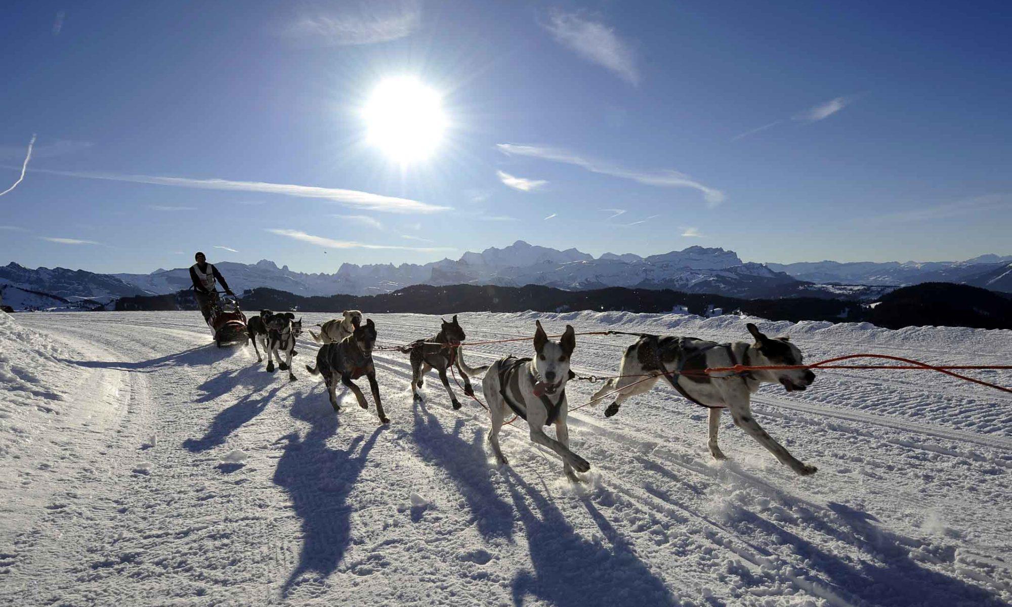 Activité chien de traineaux